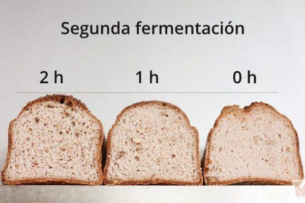 Panes con diferentes tiempos de segunda fermentación miga
