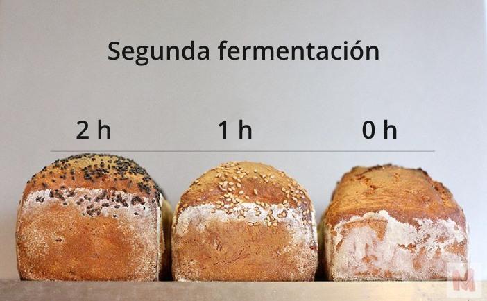Panes con diferentes tiempos de segunda fermentación