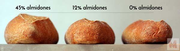 Almidones y fermentación II